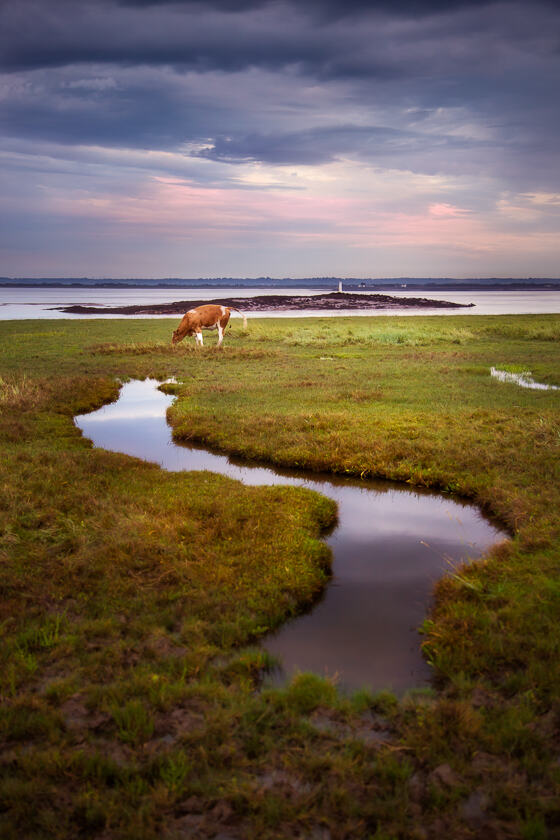 A puddle meanders towards a cow by the Severn Estuary, with a lighthouse on a small island in the background.