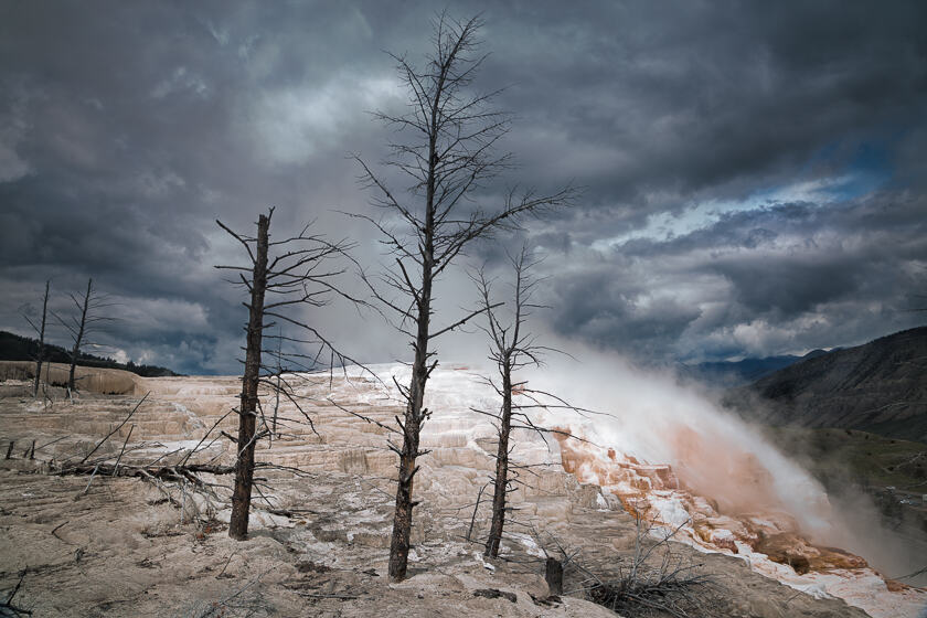 Dead trees at Main Terrace in Mammoth Hot Springs.