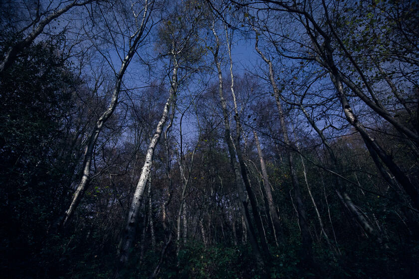 A birch tree is illuminated by the full moon in a wood.