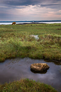 Black Rock, along the River Severn in Monmouthsire. A cow and Charston Rock Lighthouse lie in the background.