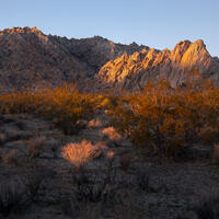 The sun fingers some bushes and a rocky outcrop in Mojave National Preserve.