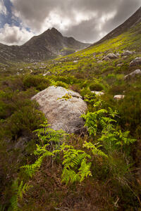 A clump of ferns cluster around a large rock in a glacial valley, with a Cir Mhor in the background,